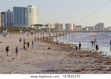 Clearwater, Florida - January 24, 2017: Late afternoon at Clearwater Beach as people wander and wade in the warm Gulf of Mexico waters among colorful buildings seabirds and washed up seaweed that line the shore