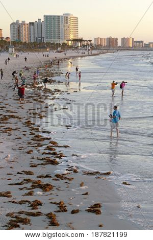 Clearwater, Florida, USA - January 24, 2017: Late afternoon at Clearwater Beach as people wander and wade in the warm Gulf of Mexico waters among colorful buildings and washed up seaweed that line the shore