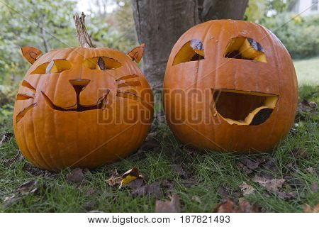 Two colorful Halloween Jack-o-lanterns with happy looking faces sit side by side in the autumn leaf strewn grass. One is carved to look like a cat with whiskers and ears and the other resembles an emoticon.