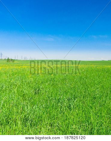 Sunny Summertime Grass Land