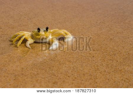 Big yellow crab standing on the beach in the sun