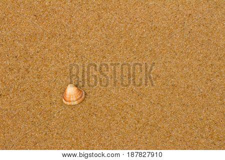 Small snail stranded on sandy beach in the sun