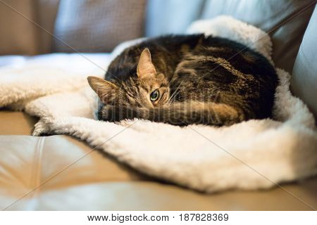 Grey tabby kitty taking a nap on a white fluffy blanket with one eye open