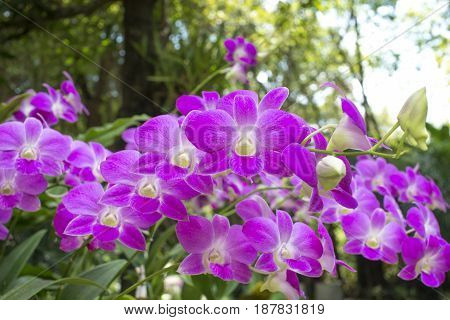 Orchid flowers. Beautiful in nature. Orchid garden.