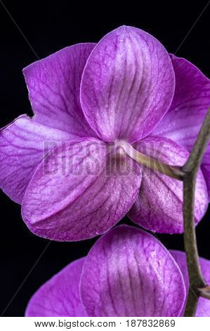 Back of orchid flower. The back of a purple orchid flower in detail.