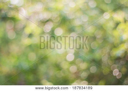Blurred Image Of Soft Green Bokeh