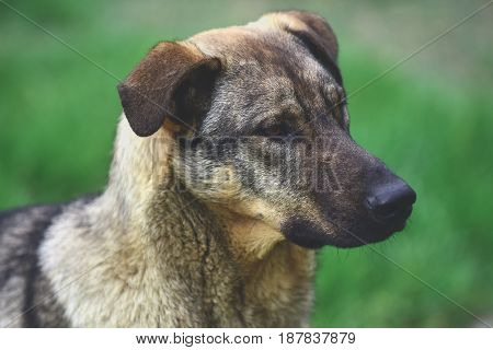 Pet Or Sad Homeless Dog On Green Grass Background