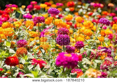 The glade is wrapped in colorful summer flowers like a rainbow