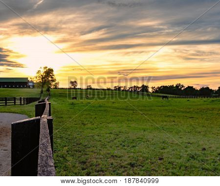 Horses grazing in a Kentucky bluegrass pasture with a colorful sunset in the background