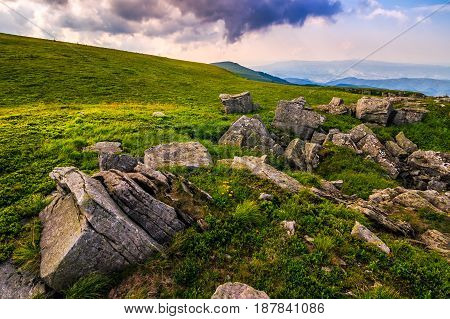 Dandelions Among The Rocks In Carpathian Alps