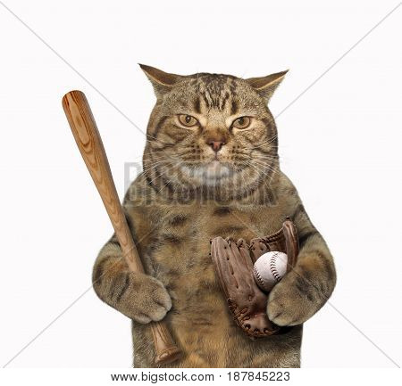 The cat looks like a baseball player. White background.