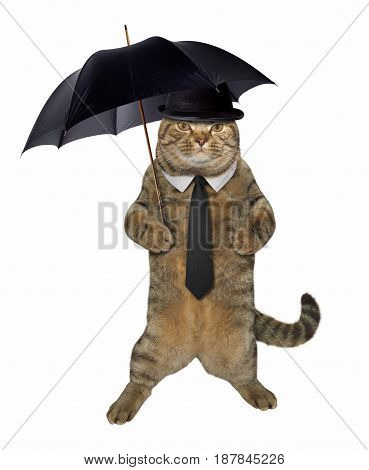 The cat dandy is holding a umbrella. White background.