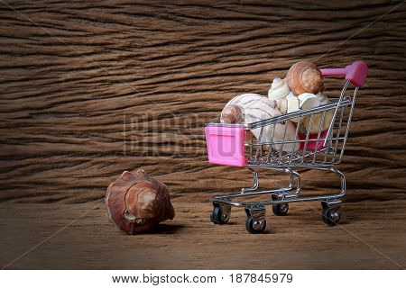 Still Life Painting Photography With Mini Shopping Cart Of A Lot Of Shells With Old Beautiful Wooden