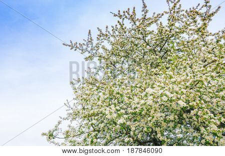 Branch of beautiful white flower
