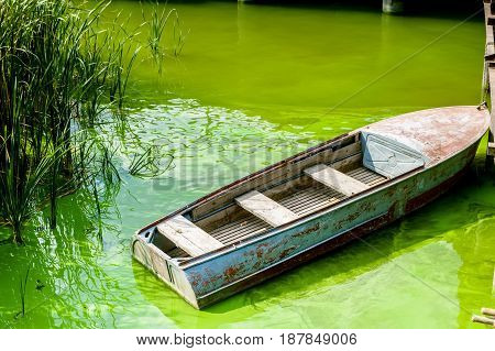 Close up small rowing boat in green Algal bloom on river in summer