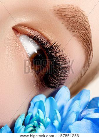 Close-up Of Beautiful Woman Eye With Blue Flower And Stylish Makeup. Beautiful Macro Shot Of Female