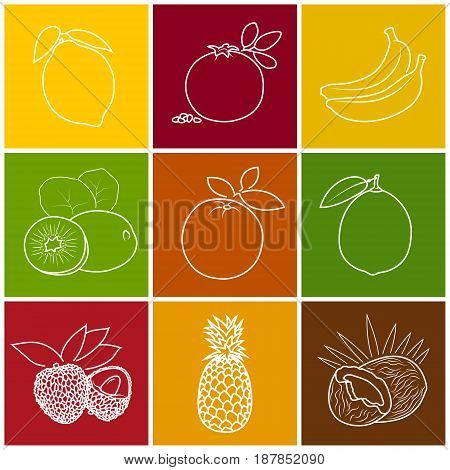 Linear Tropical Citrus Fruit Icons Lichee Kiwifruit Coconut and Lime Pomegranate with Pineapple Banana Lemon and Orange on Colored Background Thin Line Style Design Vector Illustration