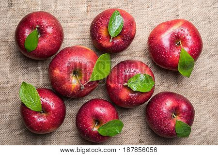 Top view of group of eight bright shiny wet red apples with green leaves and water drops on sacking material