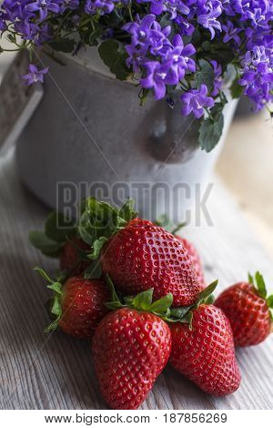 Red fresh strawberries are on the wood with campanula in grey pot as background
