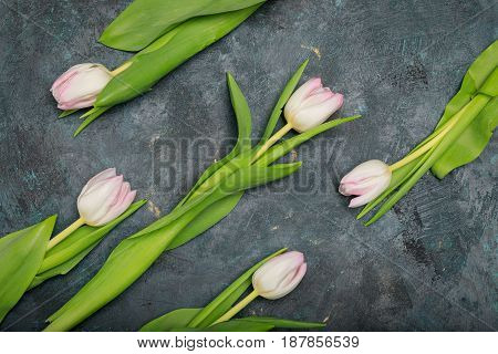 Top View Of Beautiful Tender Pink Tulips With Green Leaves On Black