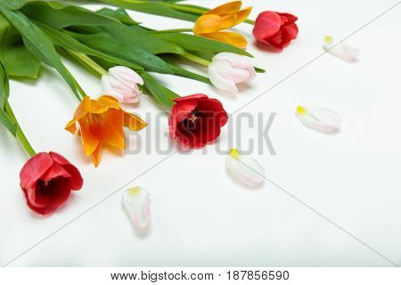 Close-up View Of Beautiful Tender Tulips With Green Leaves And Petals Isolated On White