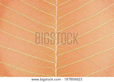 Closeup surface abstract pattern at the fresh leaf textured background in art tone