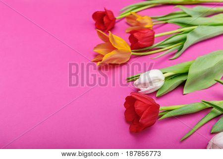 Close-up View Of Beautiful Tender Tulips With Green Leaves Isolated On Pink Background