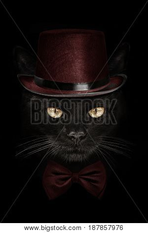 dark muzzle cat in red hat and tie butterfly