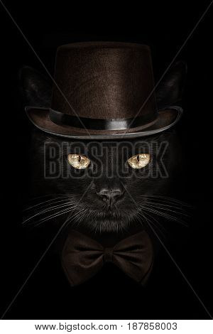 dark muzzle cat in brown hat and tie butterfly