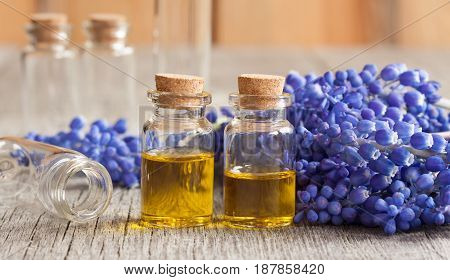 Two bottles of essential oil with blue muscari flowers on a wooden background