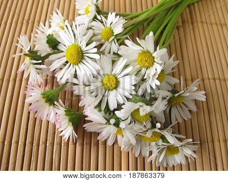 Bouquet of daisies with white flowers for flowers greeting