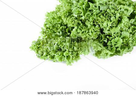 Close Up Of Green Lettuce Salad Leaves Isolated On White, Leafy Vegetables Concept