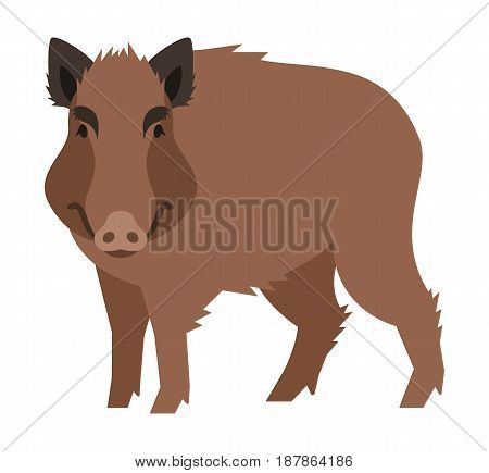 Cute smiling boar vector cartoon illustration. Wild pig zoo animal icon. Big brown adult hog standing. Isolated on white. Forest fauna childish character. Simple flat design element