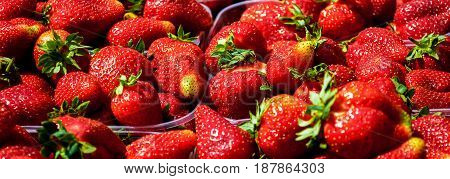 Background from freshly harvested strawberries directly above