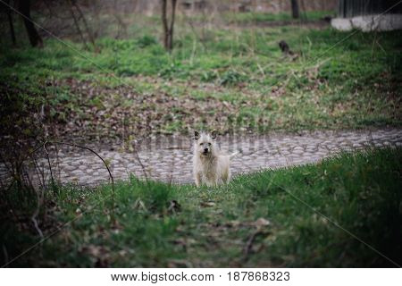 Lonely dog sitting outdoor. Cute little cur on nature background. Friendship. loneliness and devotion