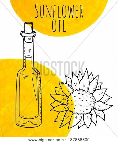 Hand drawn sunflower bottle with yellow watercolor spots. Isolated cute bottle with healthy cooking oil and sunflower. Sketchy doodle illustration for restaurant, organic shop. Glass jug with cork.