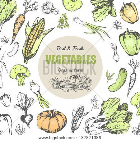 Best and fresh vegetables from organic farm poster. Ripe corn, green cucumber, crispy carrot, sweet beet, Chinese cabbage, Bulgarian pepper, pumpkin, fresh broccoli and onion vector illustrations.