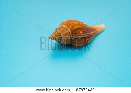 conch shell on a blue background horizontal