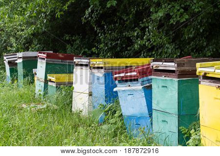 perspective view row of colored beehives by the edge of a green forest
