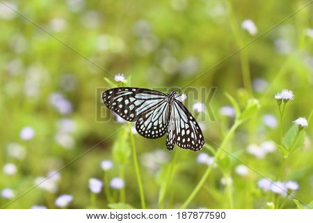 Butterflies live in gardens beautifully patterned wings.