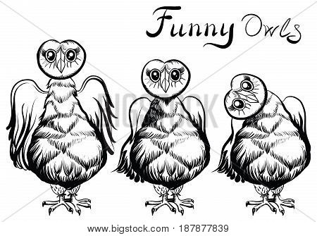 Illustration of an owls. Cartoon cute owl characters. Three hand drawn illustration of funny owls.