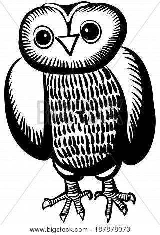 Illustration of an owl. Cartoon cute owl character. Hand drawn illustration.
