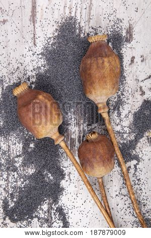 Dry poppy heads and ripe poppy seeds on wooden background.