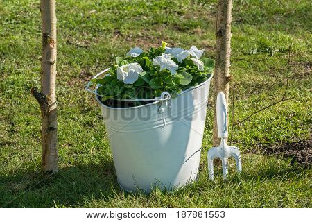 White bucket with flowers and gardening fork