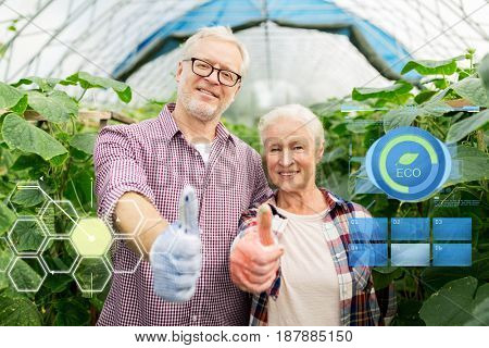 organic farming, gardening, agriculture and people concept - happy senior couple at farm greenhouse showing thumbs up