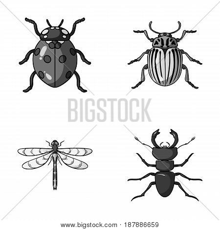 Insect, bug, beetle, paw .Insects set collection icons in monochrome style vector symbol stock illustration .