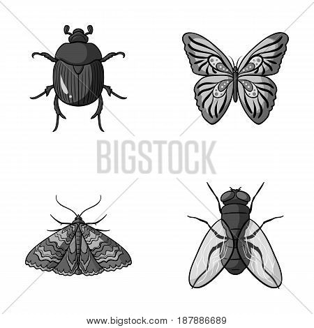 Wrecker, parasite, nature, butterfly .Insects set collection icons in monochrome style vector symbol stock illustration .