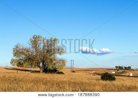 Dry Grass Against Tree And Blue Sky Horizon Landscape