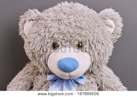 Head of a teddy bear. Soft toy on gray background.