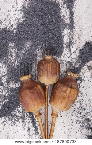 Dry poppy heads and seeds on wooden background from above.